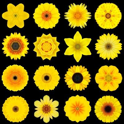 https://imgc.artprintimages.com/img/print/big-collection-of-various-yellow-pattern-flowers_u-l-pof56y0.jpg?p=0