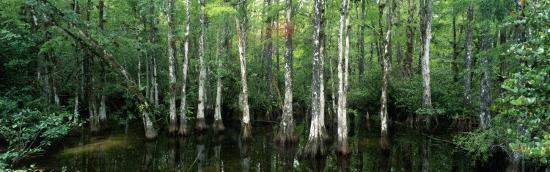 Big Cypress Nature Preserve, Florida, USA--Photographic Print