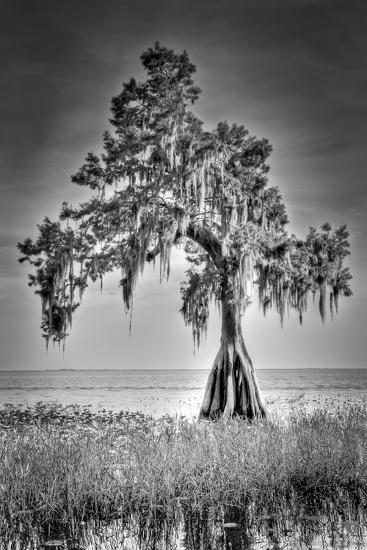 Big Cypress-Dennis Goodman-Photographic Print