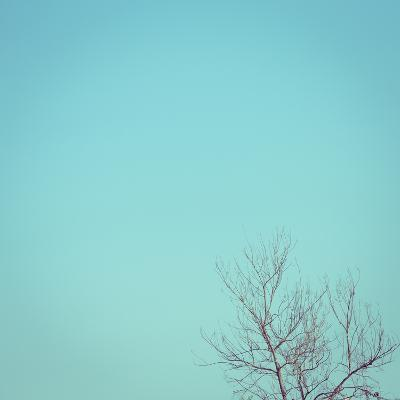 Big Dry Tree White Sky Background, Image Used Filter Vintage- sutichak-Photographic Print