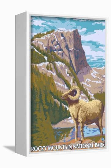 Big Horn Sheep, Rocky Mountain National Park-Lantern Press-Framed Canvas Print