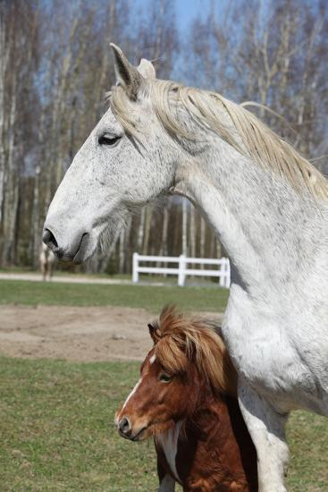 Big Horse with Pony Friend-Zuzule-Photographic Print