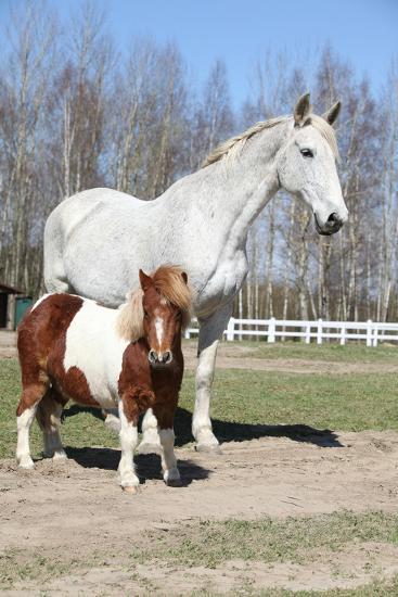 Big Horse with Pony Friend-Zuzule-Photographic Print