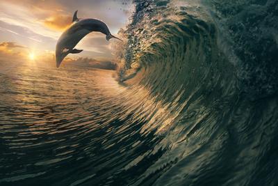 https://imgc.artprintimages.com/img/print/big-ocean-breaking-wave-and-sunset-dolphin-leaping_u-l-q1a0u9e0.jpg?p=0