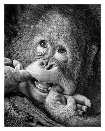 https://imgc.artprintimages.com/img/print/big-smile-please_u-l-f8wm1d0.jpg?p=0