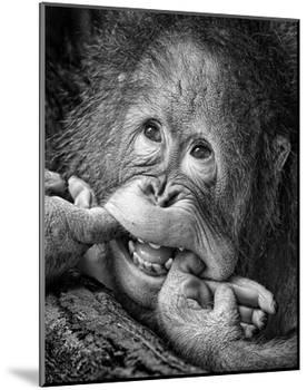 Big Smile..Please-Angela Muliani Hartojo-Mounted Giclee Print