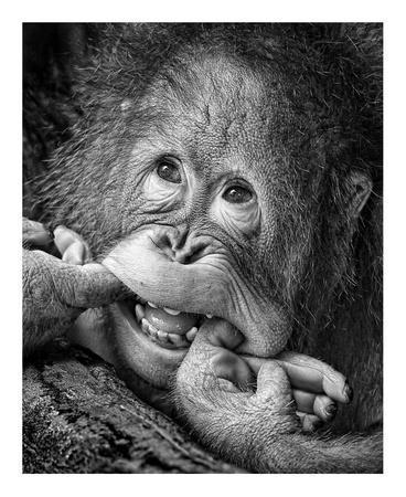 https://imgc.artprintimages.com/img/print/big-smile-please_u-l-f8wm1e0.jpg?p=0