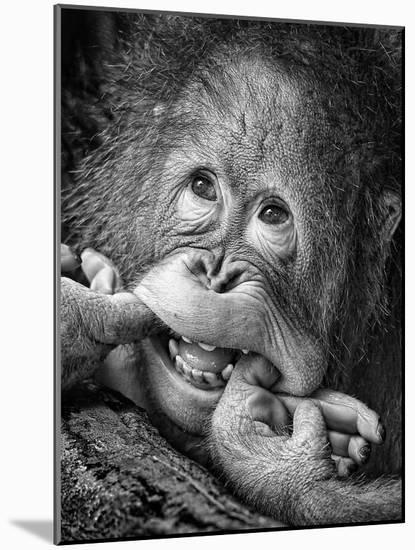 Big Smile.....Please-Angela Muliani Hartojo-Mounted Premium Photographic Print
