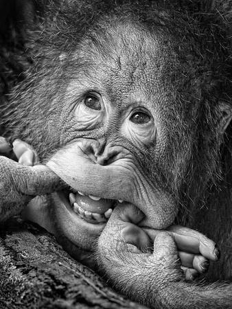 Big Smile.....Please-Angela Muliani Hartojo-Photographic Print
