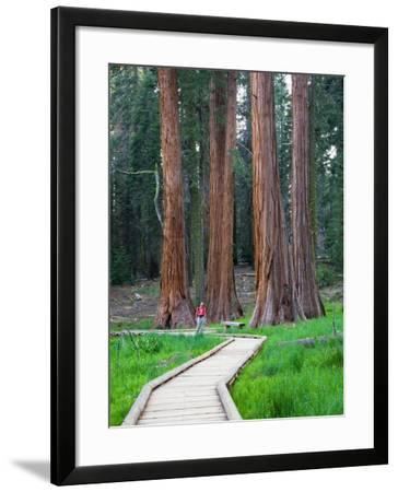 Big Trees Trail with Giant Sequoia Trees, Round Meadow, Sequoia National Park, California, USA-Jamie & Judy Wild-Framed Photographic Print