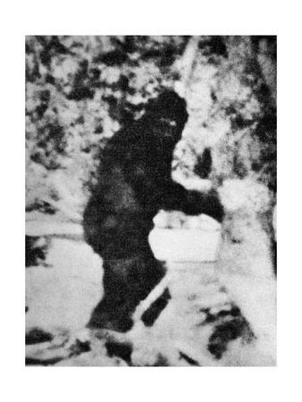 https://imgc.artprintimages.com/img/print/bigfoot-film-1967_u-l-pk0t3d0.jpg?p=0