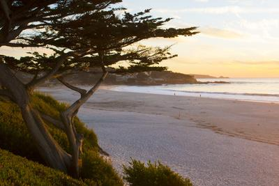 Carmel, California, cypress tree and waves at sunset on ocean, Pebble Beach