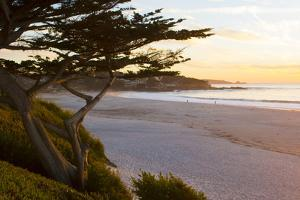 Carmel, California, cypress tree and waves at sunset on ocean, Pebble Beach by Bill Bachmann