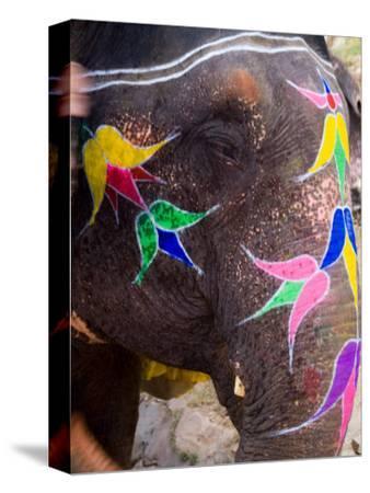 Elephant at Amber Fort, Rajasthan, Jaipur, India