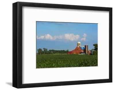 Farm with Red Barn and Corn, Milford Center, Ohio