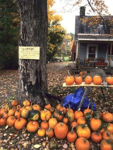 Pumpkins For Sale in New England by Bill Bachmann