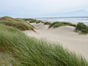 Sand Dunes and Scrub in Oregon Dunes National Recreation Park in Florence, Oregon, Usa by Bill Bachmann