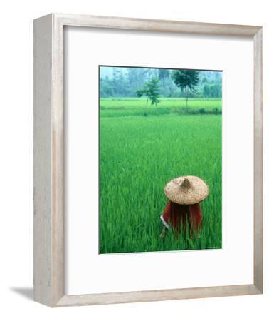 Scenic of Rice Fields and Farmer on Yangtze River, China