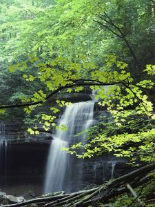 A Cascade Falls from a Rock Formation by Bill Curtsinger