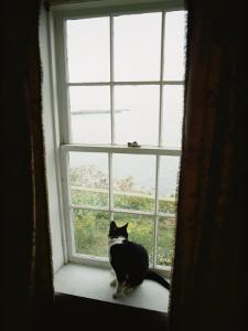 A Cat Sitting on a Windowsill by Bill Curtsinger