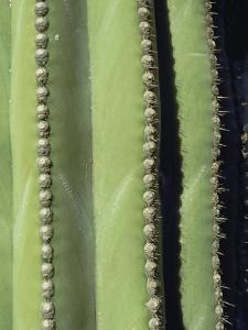 A Close, Detailed View of a Cactus by Bill Curtsinger