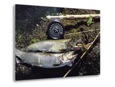 A Pair of Cutthroat Trout, Salmo Clarki, and a Reel Lie on a Bank