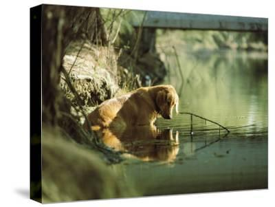 A Pet Dog Sits in the Shallow Water of a Creek