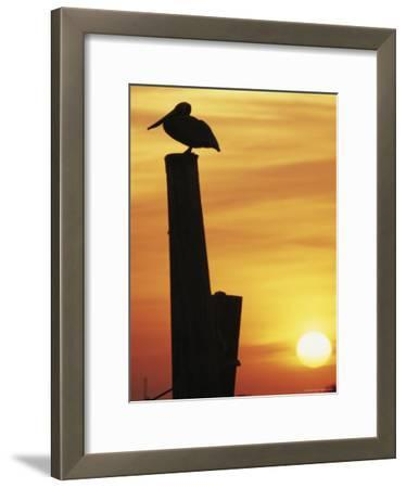 A Silhouetted Brown Pelican Perches on a Post at Sunset