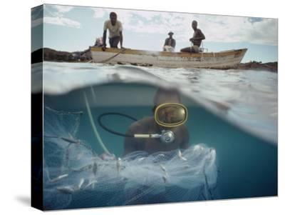 Commercial Fish Collectors Capture Cichlids