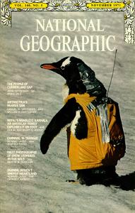 Cover of the November, 1971 National Geographic Magazine by Bill Curtsinger