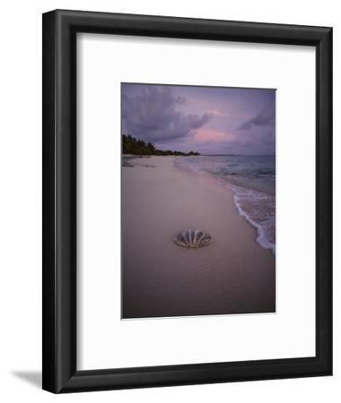 Giant Clam Shell on a Deserted Beach on Bikini Island