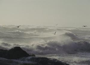 Sea Birds Fly Above Large Waves Crashing onto Maine's Rocky Coastline by Bill Curtsinger