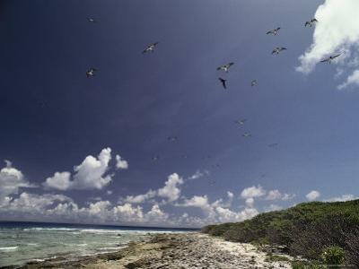 Sea Birds Fly over a Shore at Bikini Atoll