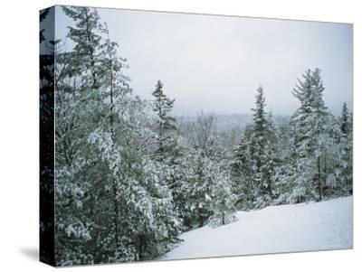 Snow-Covered Evergreens in a Winter Landscape