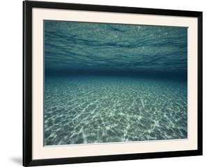Underwater View by Bill Curtsinger