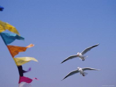 Gulls Fly over Colorful Flags in Bombay
