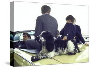 Presidential Contender Bobby Kennedy with Sons and Pet Dog Freckles in Convertible During Campaign by Bill Eppridge