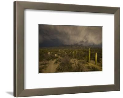 A Hiking Trail in Saguaro National Park During Approaching Storm Clouds Lit by Tucson Lights