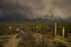 A Hiking Trail in Saguaro National Park During Approaching Storm Clouds Lit by Tucson Lights by Bill Hatcher
