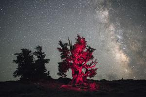 A Illuminated Bristlecone Pine Tree Beneath the Milky Way in Inyo National Forest by Bill Hatcher
