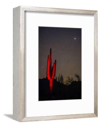 A Night Photo of a Saguaro in Organ Pipe National Monument in the Ajo Mountains, Arizona