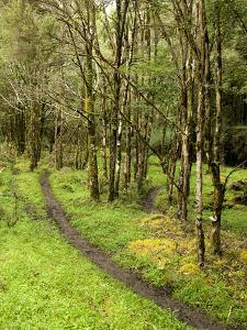 A Section of a Racing Trail in the Deception Valley by Bill Hatcher