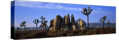 Joshua Trees Grow Among Rock Formations
