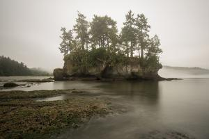 Morning Fog Along the Coast of the Olympic Peninsula, Washington by Bill Hatcher