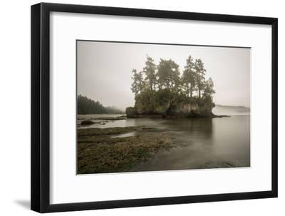 Morning Fog Along the Coast of the Olympic Peninsula, Washington