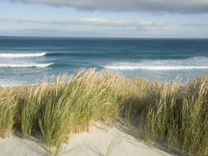 Scenic Hillside of the Beach and Grasses on the Pacific Ocean by Bill Hatcher