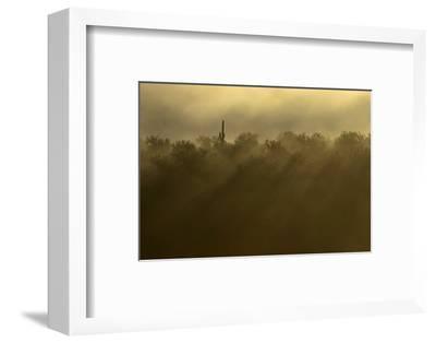 Sentinel Peak in the Fog, Tucson, Arizona