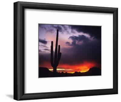 Storm Clouds Pass over a Saguaro Catus near Phoenix, Arizona