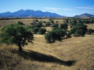 Trees Below the Santa Rita Mountains in Southern Arizona by Bill Hatcher