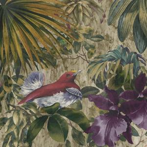 King Bird of Paradise by Bill Jackson